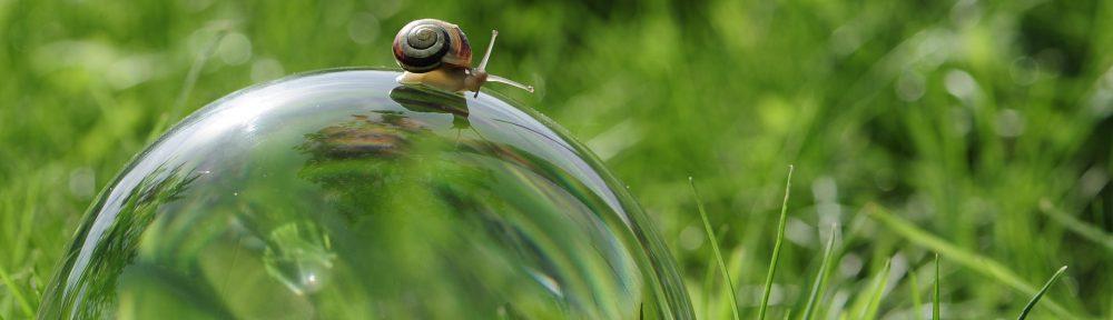 snail copyright bella67 (pixabay)